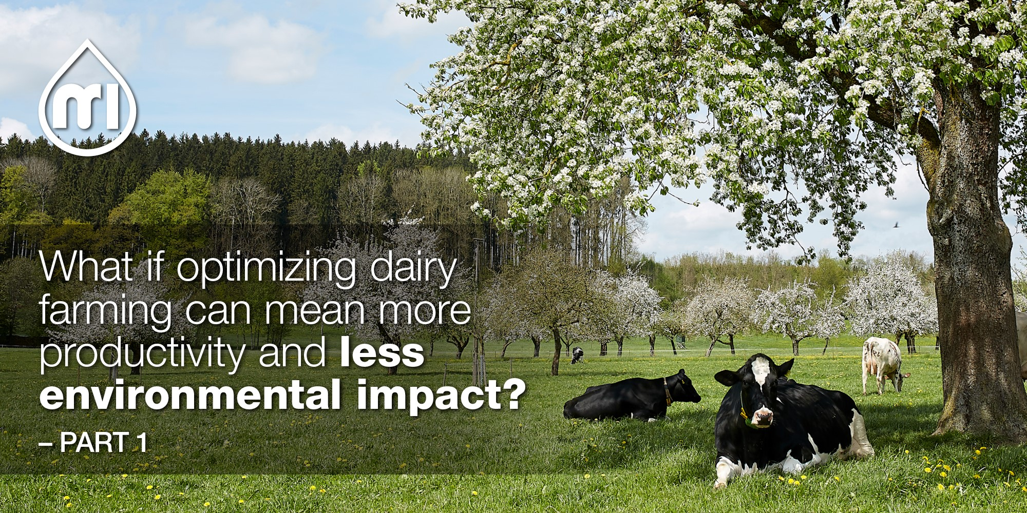 What if optimizing dairy farming can mean more productivity and less environmental impact? - Part 1