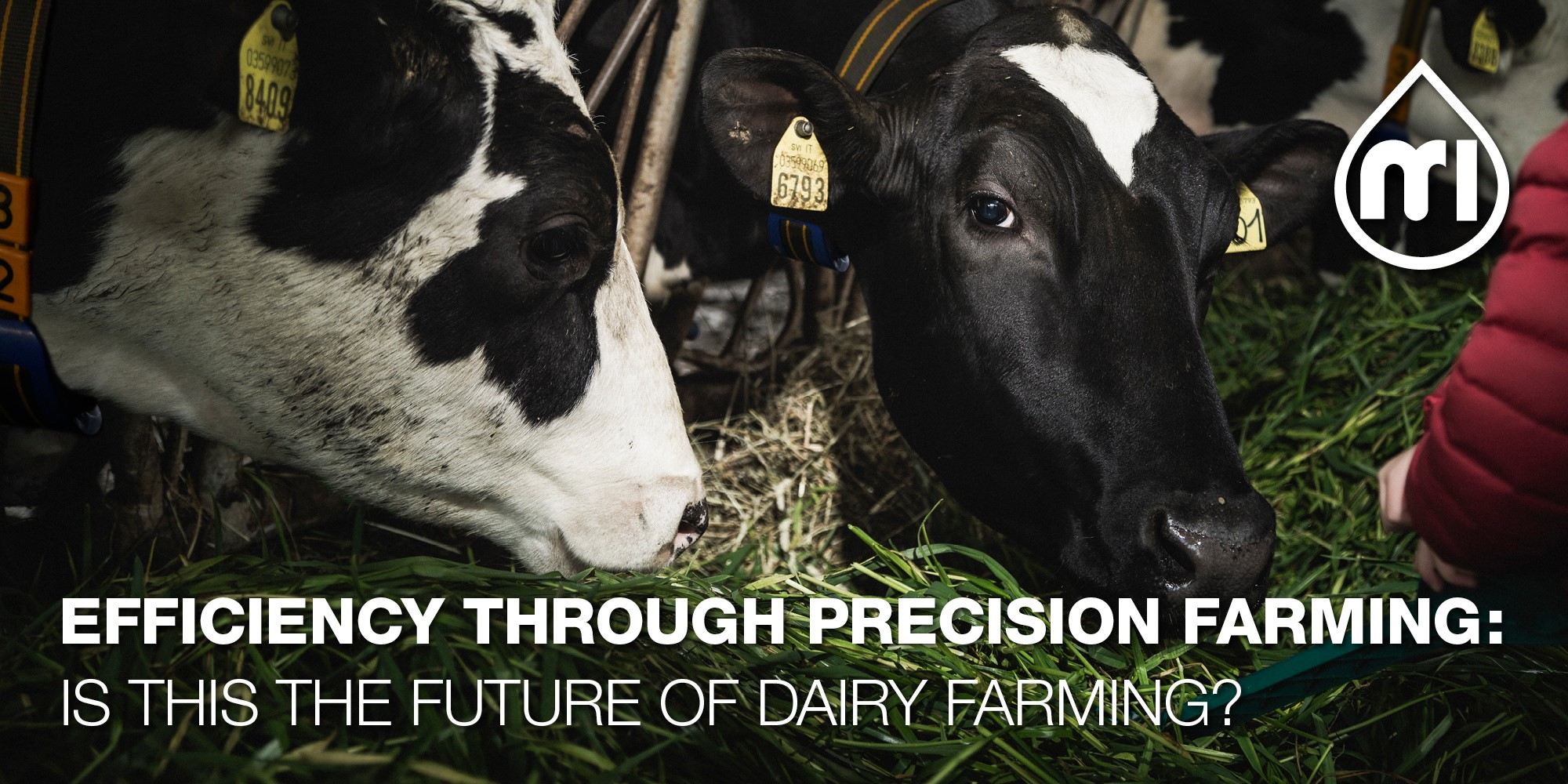 Efficiency through Precision Farming: is this the future of dairy farming? Part 2